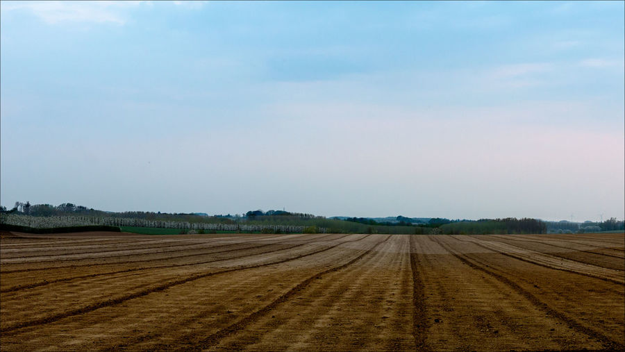 Agriculture Arid Climate Beauty In Nature Cloud Cloud - Sky Day Desert Diminishing Perspective Field Horizon Over Land Idyllic Landscape Nature No People Non-urban Scene Outdoors Remote Rural Scene Scenics Sky The Way Forward Tranquil Scene Tranquility Vanishing Point