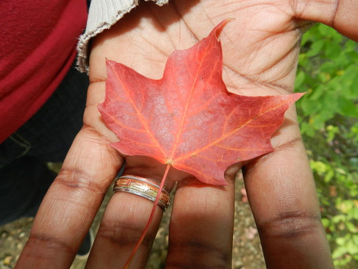 Maple Leaf Autumn Canada Canadian Photography Green Home Human Finger Human Skin Leaf Leaf Vein Maple Leaf Natural Condition Outdoors Red Ring Beauty In Nature Greek Greek Key Gold Red Leaves Red Leaf Seasons Change My Point Of View My Hand  Canada, Eh? God