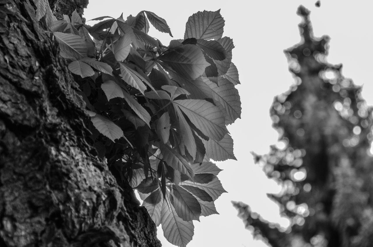 outdoors, low angle view, focus on foreground, no people, day, close-up, leaf, growth, nature, flower, beauty in nature, tree, fragility, sky, freshness