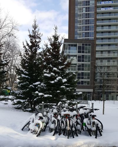 Bicycles on snow covered tree