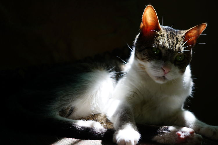 Un gato tomando sol. Animal Themes Cat Close-up Day Domestic Animals Domestic Cat Feline Indoors  Looking At Camera Mammal No People One Animal Pets Portrait Whisker
