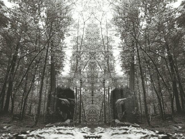 Mirrorworld Dark Forest