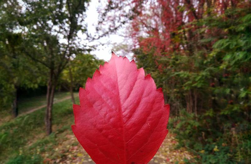 Red autumn Rome