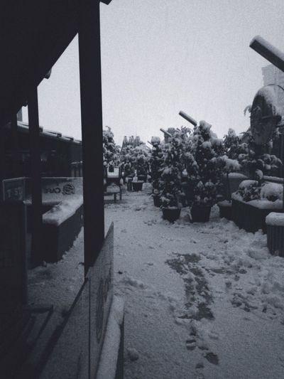 Snow Ice Nature Tree No People Ankara Winter