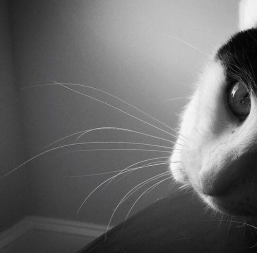 Frisky Cat Bnw Pet Playful Frisky