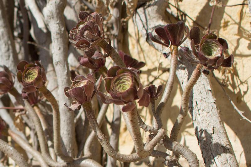 Flowers Growing On Plant Stem