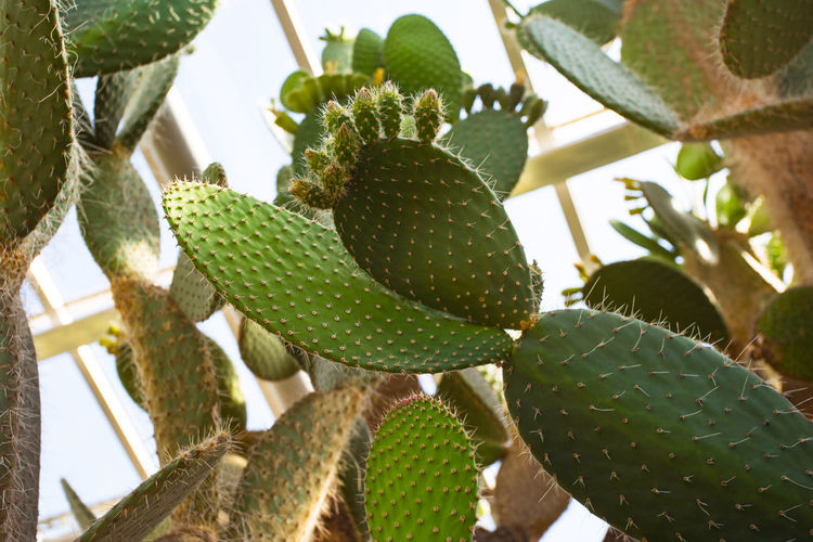 Close-up of succulent plant growing on tree