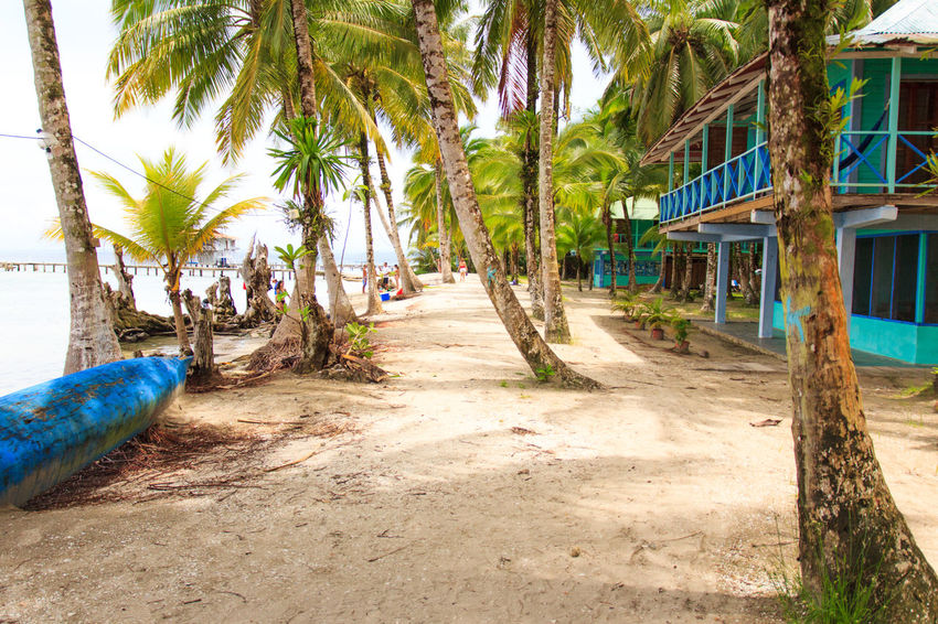 Paradise island Beach Beauty In Nature Cabin Footpath Growth Local Palm Tree Paradise Peace And Quiet Relax Sea Tranquil Scene Tree Trunk Vacations