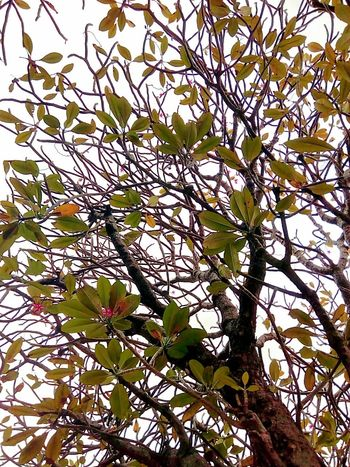 Tree Tree_collection  Leaves Leaf Leaf Collection Leaves Collection Leaves Color Leaf Color Tree Art Beauty Of Tree Patterns Pattern Pattern Of Tree Tree Photography Beauty Of Nature Creative Color Creative Color On Leaves Creative Creative Photography