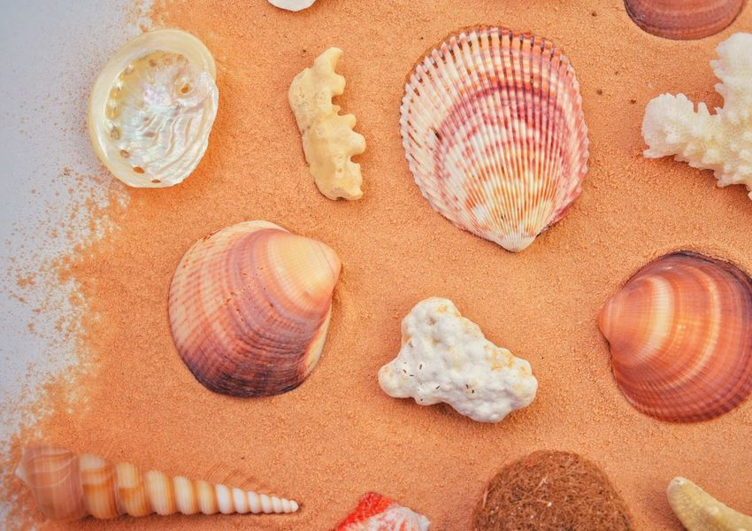 Seashell Sand Nature High Angle View Jellyfish No People Beach Beauty In Nature Sea Life Close-up Day UnderSea Summer Exotic Sandy Beach Seashells Orange Travel Resting Time Summer Vacation Background Sea Beauty In Nature Sea_collection