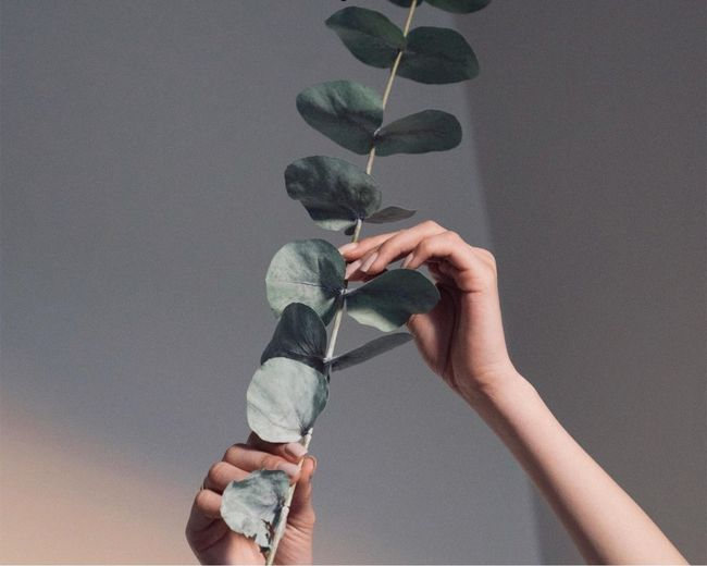 Cropped hands of woman holding plant against ceiling