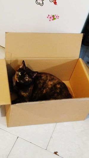 EyeEmNewHere Multicolor Cat Indoor Domestic Animals Keep The Eye Cat In The Box