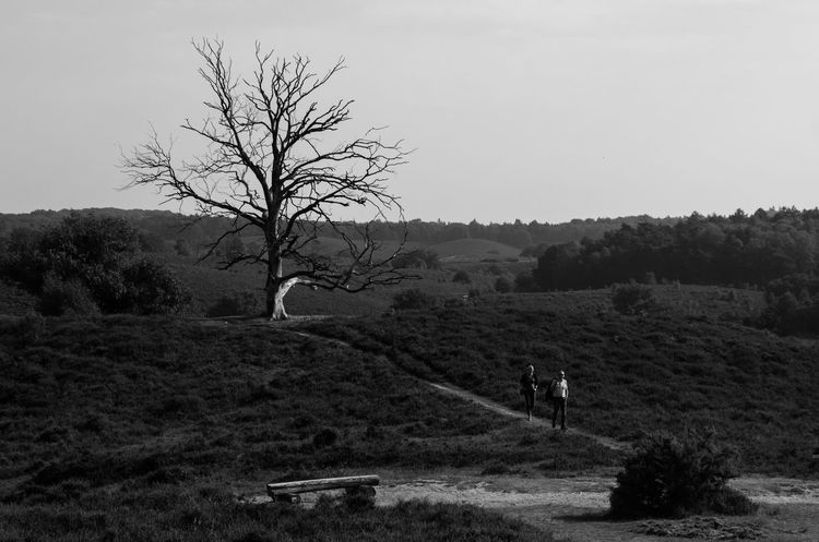 A tree who dies in the winter and comes alive in summer.. We reflect on this. Humans are naure Nature Tree Human Reflection Photography Blackandwhite Streetphotography Travel Streetphotography_bw Black & White Netherlands
