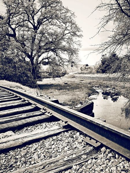OpenEdit Popular Photos Tracks Trees Train Tracks Traveling Blackandwhite Black & White Check This Out Travelling
