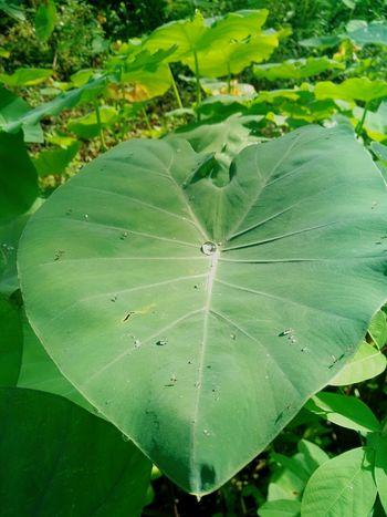 Green Plants 🌱 Nature Pearl Waterdrop Droplet Blur Kerala Rain Dewdrops