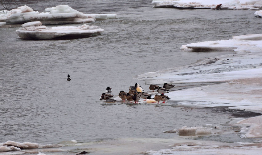 Birds perching on iceberg by lake