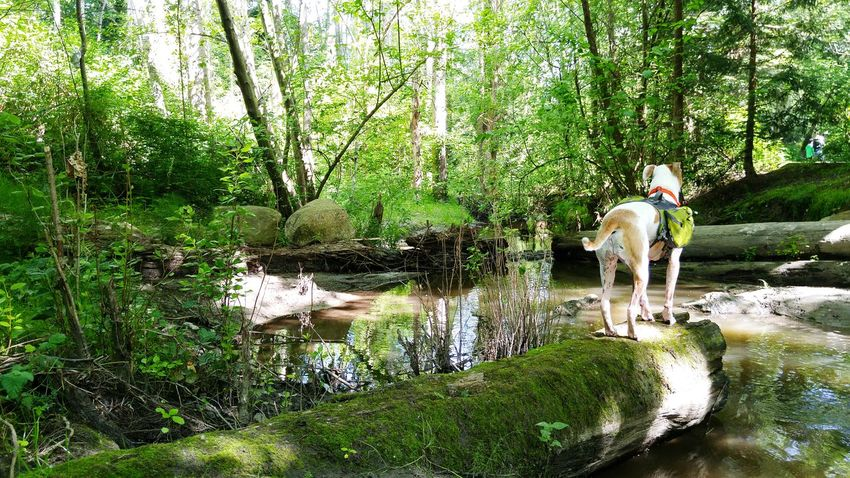 Tree Water Forest Full Length Standing Nature Tranquility Tranquil Scene Domestic Animals Day Non-urban Scene Beauty In Nature Outdoors Dog Dogwalk Dog Walking Urban Hikers Urban Forest Urban Forests Dogs Life Hiking Hikingphotography Pet Portraits