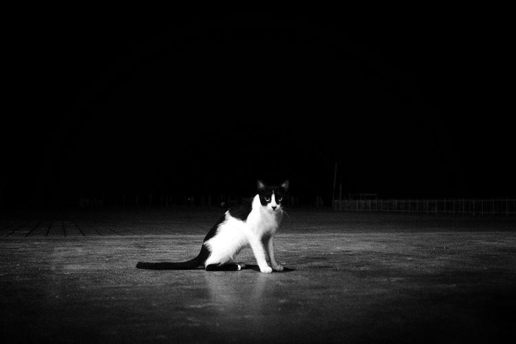 Cat sitting on floor against black background