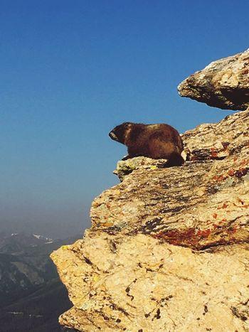 Estes Park, CO Colorado Photography Rockymountainnationalpark Summertime Hikingphotography Wildlife & Nature