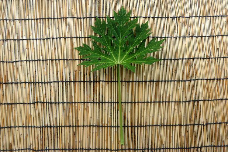 Papaya leaf on bamboo background Bamboo Background First Eyeem Photo Freshness Green Leaf Leaf Leaf Texture Papaya Papaya Leaf Papayas Plant
