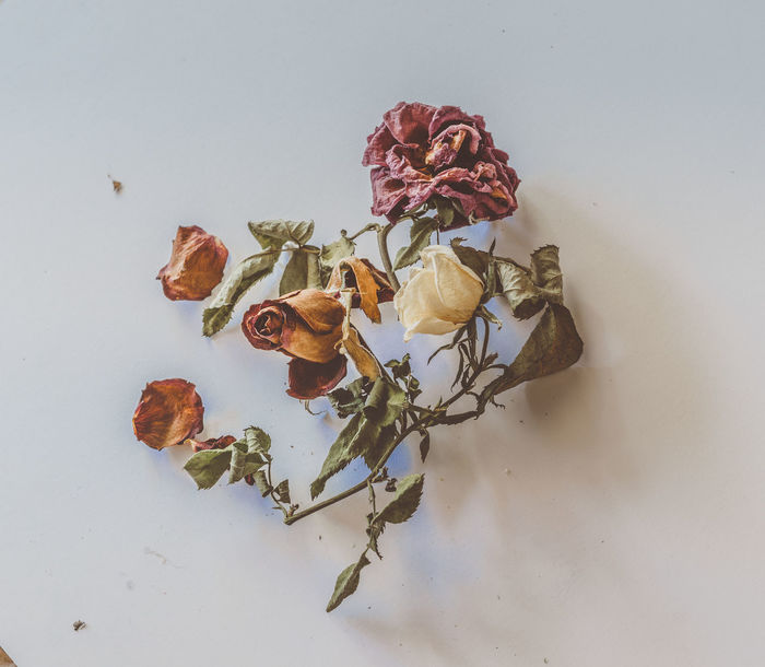 Roses are Red Flower Arrangement Red Rose, Flower Porn, Flower Art Roses Are Red Roses, Flowers, Nature, Garden, Bouquet, Love, Roses_collection Beauty In Nature Close-up Day Dried Flower Art Photography Dried Flowers Dried Plant Flower Flower Head Fragility Freshness Indoors  Nature No People Petal Rose - Flower Studio Shot White Background White Roses🌹🌹🌹 Wilted Plant