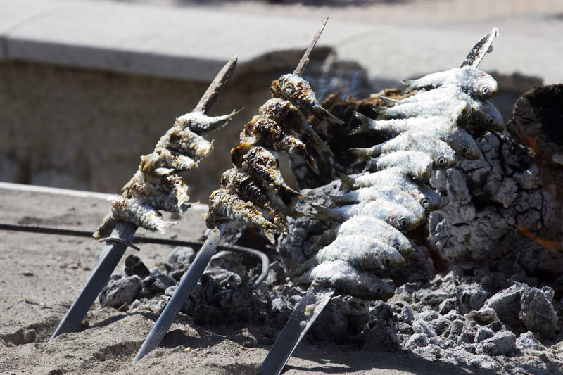 Close-up of crab on wood at beach