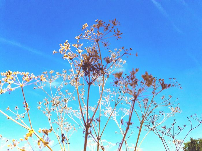 Plants 🌱 Outdoors Clear Sky First Eyeem Photo EyeEmNewHere EyeEm Nature Lover Colorful Uncultivated Flower Collection Smartphonephotography EyeEm Selects Flower Clear Sky Tree Blue Branch Flower Head Sky Close-up Plant Life Stamen Pollen My Best Photo