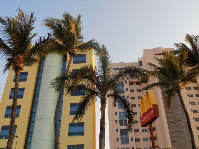 Estos edificios tienen algo que me hace amarlos.Tree Palm Tree No People Building Exterior Architecture Outdoors City Day Sky Nikoncoolpixl340 Mcdonalds Building Story Building And Sky Architecture Colors Picture Photography