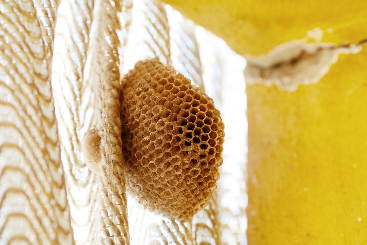 Close-up of wasp nest