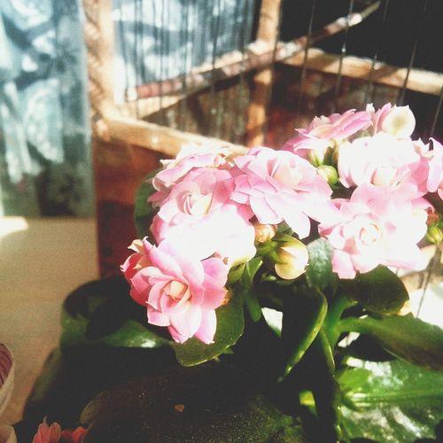 Urban 4 Filter каланхое цветы🌸🌼🌻💐🌾🌿 розовые каландига микс