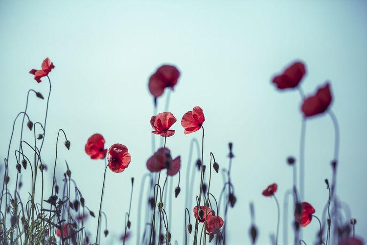 ©️905 poppy.