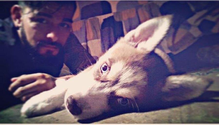 HuskyFamily Photooftheday Husky Huskylove Sally Beauty Beardbrothers Beard Honor Honey Loveyou Costarica Crossfit Tattoos Youlove Dog Puppy Loveyou Hello Never NewBalance Adidas