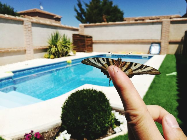 EyeEm Selects Swimming Pool Outdoors Beauty In Nature Nature Animal Themes