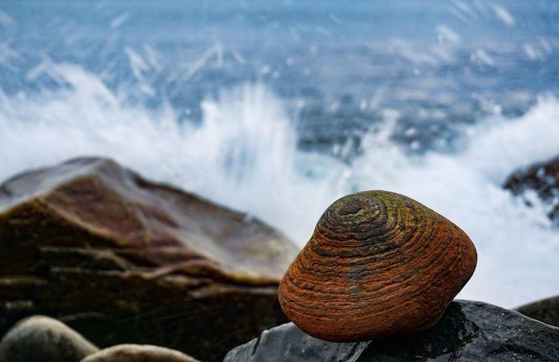 Close-up of stone at seashore