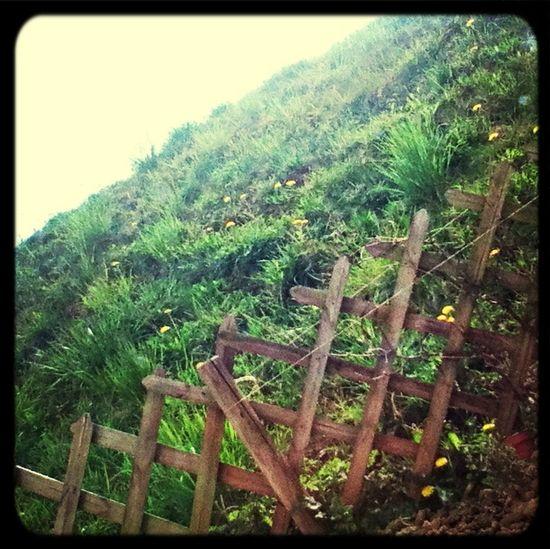 Hello World the garden First Eyeem Photo