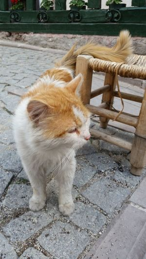 Animals Cat Day Domestic Animals Outdoor Pet Animal Street Cat Whiskers Cute Cute Cat Animal Theme Animal Photography Animal_collection