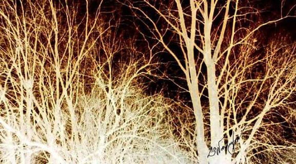 The light woods Woods