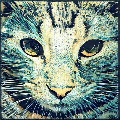 Gucio Cats 🐱 Cat Lovers Cat♡ Prisma Art Prisma Effect Prisma_Filter