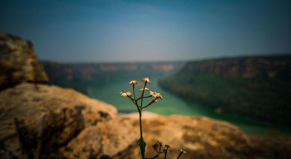 Close-up of wilted plant on rock against sky