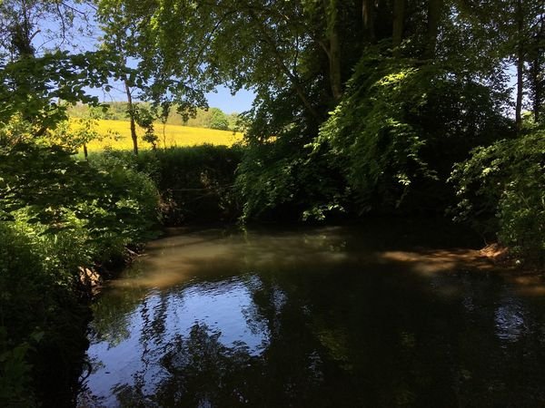 A quiet oasis on a hot day. River IPhoneography Tree Plant Water Reflection Nature Growth Green Color Tranquility No People Beauty In Nature Day Tranquil Scene Outdoors Sky Sunlight Idyllic