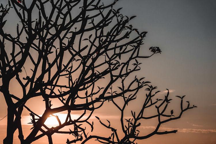 Tree Sky Bare