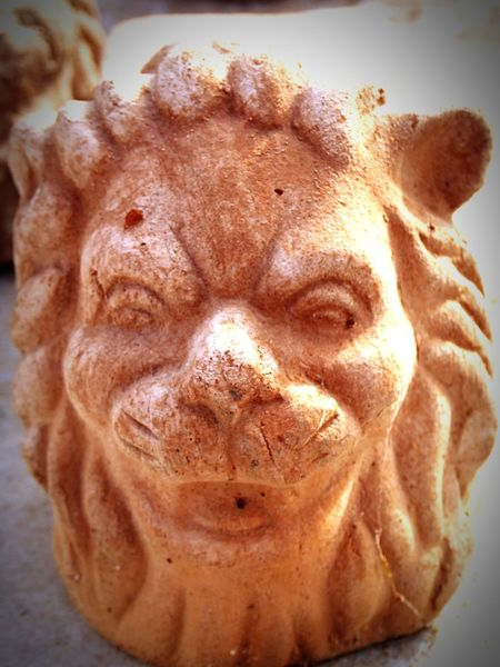 Garden Photography Garden Detail Terracotta Lion My Garden 😊 Enjoying Life Animals In The Wild EyeEm Gallery Special👌shot Things I Like IT DONT BITE !!!? Antique Specialeffect Personality  Detailphotography
