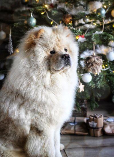 Pets Dog Animal Cute Domestic Animals Tree One Animal