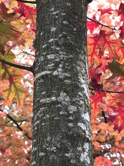 Close-up of tree trunk during autumn