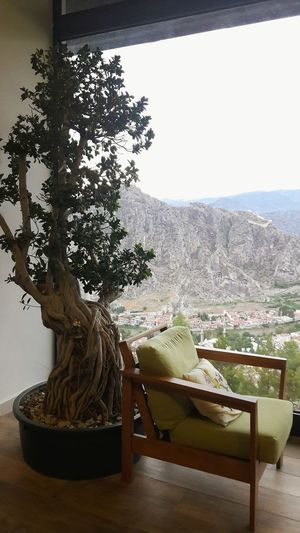 Tree Dekoration Dekorasyon Terascafe Teras Amasya Amasya/Turkey Resting Time Tranquility Wonderfulplaces Beautiful Place View From My Window Amasya City Dekorasyonönerisi Home Interior Indoors  Yeşilırmak Ve Kralkayamezarları Manzaralı Mekan Köşem Huzurluyum Sükunet EyeEmNewHere Break The Mold