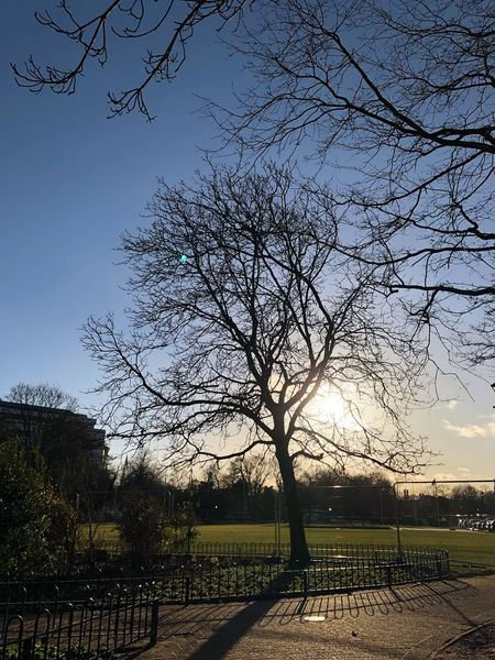 Cardiff University Sunnydays Sunnyday☀️ Sunny Day University Cardiff University CardiffCity Cardiff City Centre Cardiff City Cardiff Tree Bare Tree No People Outdoors Nature Sky Beauty In Nature Clear Sky Day Branch