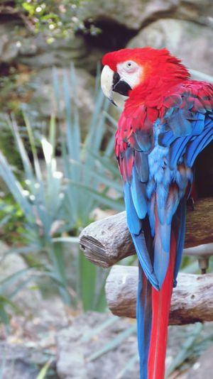 Close-Up Of Macaw Perching On Branch