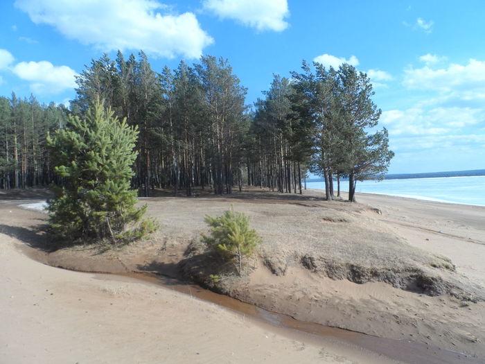 Мокрые пески Природа деревья Sunset Nature вода Залив Syberia Syberian Nature Иркутск сибирь пляж песок Лес Water