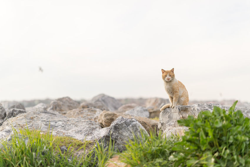 Stray Cat Against the Sea Cat Cat Lovers Cats Cats Of EyeEm Cat♡ Close-up Day Domestic Animals Domestic Cat Feline Fluffy Heat - Temperature Istanbul Looking At Camera Mammal Nature No People One Animal Outdoors Portrait Stray Stray Animal Stray Cat Summer Tabby Cat
