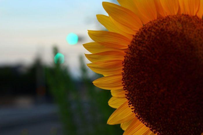 Good Morning Flower 朝散歩 暇人